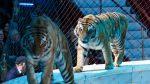 11 animale au murit astazi la Circul Globus intr-un incediu puternic