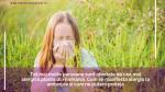 Tot mai multe persoane sunt afectate de cea mai alergica planta din Romania. Cum se manifesta alergia la ambrozie si cum ne putem proteja