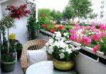 Ingrasamant natural pentru florile din ghiveci